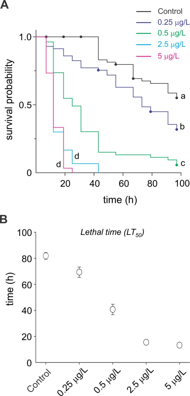 Deltamethrin-mediated changes in the survival abilities of C . radiatus . ( A ) Survival curves of C . radiatus nymphs subjected to up to 96 h deltamethrin exposure. Only the survival curves of the highest concentrations (2.5 and 5 μg of a.i/L) were not significantly different by Holm-Sidak's test ( P > 0.05). Points represent the censored data (nymphs surviving until the end of the experiment, as well as the emerged adults). ( B ) Mean lifetime of C . radiatus nymphs under 96 h deltamethrin exposure. Dispersion expressed as SE.