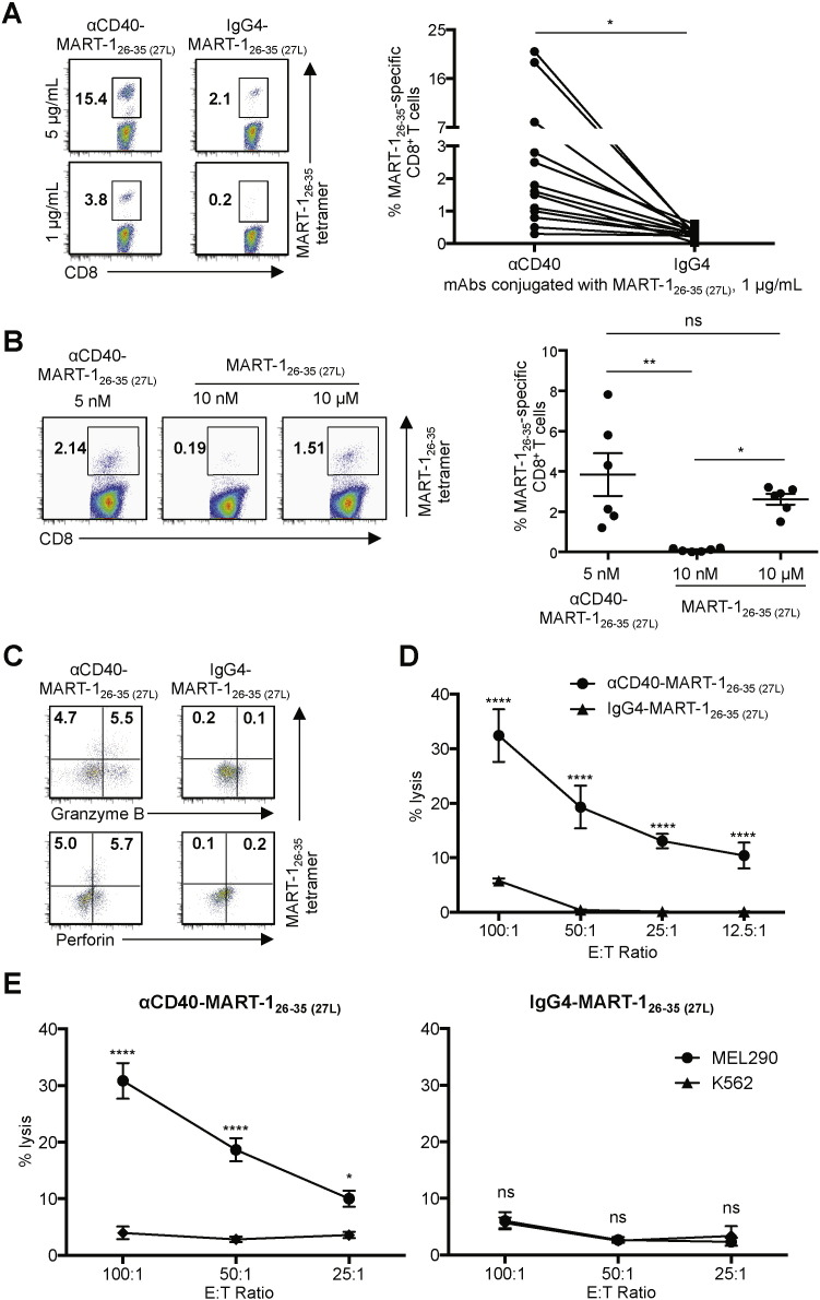CD8 + CTLs primed with CD40-targeted DCs are functional. A . Purified naïve CD8 T cells were co-cultured with Mo-DCs loaded with the indicated amounts of αCD40-MART-1 26–35 (27L) or IgG4-MART-1 26–35 (27L) conjugates for 9 days. CD8 + T cells were then stained with HLA-A*A0201-MART-1 26–35 tetramer. Representative flow cytometric data (left) and donor-matched frequencies of MART-1 26–35 -specific CD8 + T cells induced with αCD40-MART-1 26–35 (27L) - or IgG4-MART-1 26–35 (27L) -loaded Mo-DCs are shown (right). Dots represent data generated with cells from individual healthy donors (n = 13). Significance was determined using a paired t -test. B . As in A , purified naïve CD8 + T cells were co-cultured with Mo-DCs loaded with the indicated amounts of αCD40-MART-1 26–35 (27L) conjugate or MART-1 26–35 (27L) peptide. CD8 + T cells were stained with HLA-A*A0201-MART-1 26–35 tetramer. Representative flow cytometric data (left) and summarized data (right). Dots represent data generated with cells from individual healthy donors (n = 6). Data are presented as mean ± SD. Significance was determined using an ANOVA test. C . CD8 + T cells in A primed with Mo-DCs loaded with 1 μg/mL mAb-MART-1 26–35 (27L) were stained for granzyme B and perforin. D . A 5 h 51 Cr release assay using T2 cells loaded with 10 μM MART-1 26–35 peptide were used as target cells. CD8 + T cells primed with Mo-DCs loaded with 1 μg/mL αCD40-MART-1 26–35 (27L) or IgG4-MART-1 26–35 (27L) were used as effector cells. E . A 5 h 51 Cr release assay using MEL290 and control K562 cell lines as target cells. CD8 + T cells primed with Mo-DCs loaded with 1 μg/mL αCD40-MART-1 26–35 (27L) (left) or IgG4-MART-1 26–35 (27L) (right) were used as effector cells. Error bars in D and E indicate SD of triplicate assays. Significance was determined using an ANOVA test. Two independent experiments resulted in similar data. *, P