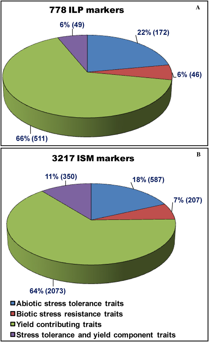 Proportionate distribution of 778 ILP ( A ) and 3217 ISM ( B ) markers designed from various known cloned genes that are functionally well-characterized for diverse agronomic traits in rice. The ILP (66%) and ISM (64%) markers derived particularly from multiple known cloned genes governing yield-contributing traits were abundant. Values in parentheses indicate the number of ILP and ISM markers. The detail information regarding known cloned gene-derived ISM and ILP markers are mentioned in the Tables S3 and S4.
