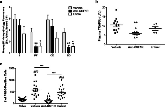 Therapeutic treatment with anti-colony stimulating factor-1 receptor ( anti-CSF1R ) suppresses bone destruction and pannus formation in collagen-induced arthritis ( CIA ).  a  Histopathological assessment of CIA in mice treated with vehicle, Enbrel, or muAB5 after the initiation of arthritis. * P