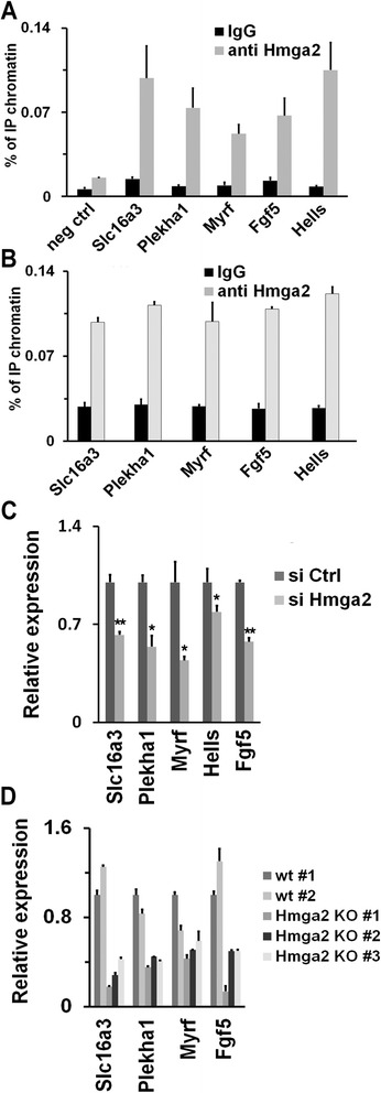 Hmga2 is involved in the regulation of Otx2 target genes upon the exit of embryonic stem cells (ESCs) from the pluripotent ground state. a ChIP-qPCR analysis of the association of Hmga2 to gene targets of Otx2 in wildtype (wt) epiblast-like stem cells (EpiLCs). The negative control (neg ctrl) corresponds to the region 10.1 kb upstream of the Hmga2 transcriptional start site. qPCR data represent means of three independent experiments (n = 3) ± SEM. b ChIP-qPCR analysis of the association of Hmga2 to gene targets of Otx2 in wt induced pluripotent stem cells (iPSCs) induced to differentiate. qPCR data represent means of two independent experiments (n = 2) ± SD. c The relative level of the indicated mRNAs was measured by qPCR in EpiLCs derived from ESCs transfected with si Ctrl and si Hmga2. qPCR data represent mean of three independent experiments (n = 3) ± SEM. * P