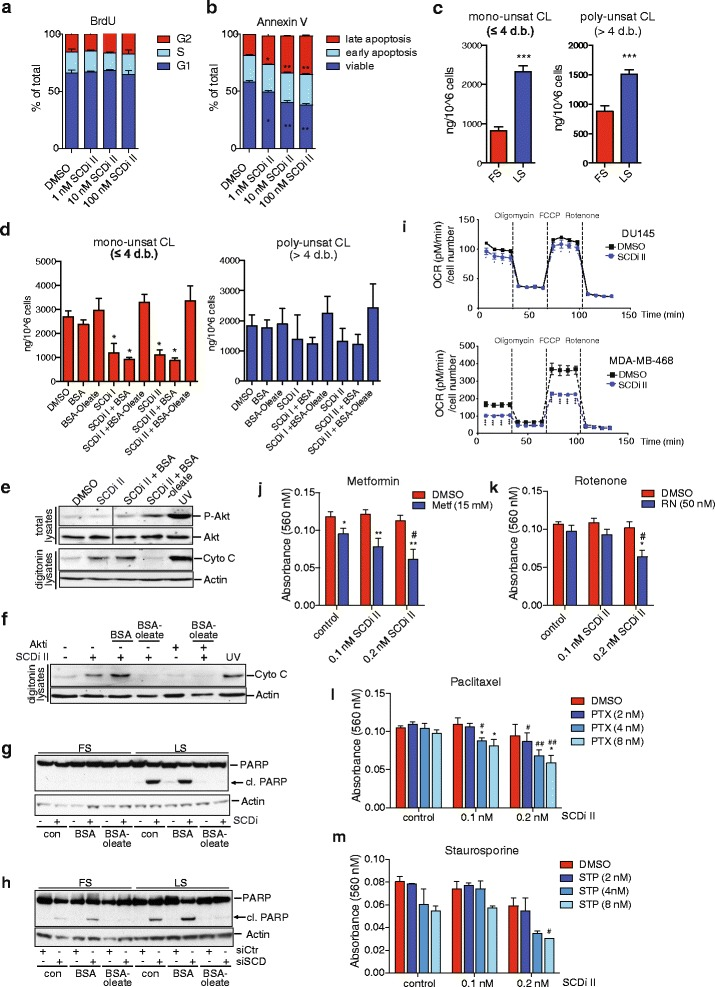 SCD inhibition alters cellular cardiolipin composition leading to cytochrome C release and sensitisation towards apoptosis. a DU145 cells were treated with different concentrations of SCD inhibitor (SCDi II) and proliferation was determined by BrdU labelling. b Cells treated as in a were used to determine apoptosis using Annexin V staining. Data represent mean ± SEM of three independent biological replicates. Statistical comparisons were performed using Student t test (* p ≤ 0.05). c Quantitative lipid profiling of cardiolipin (CL) content of DU145 cells grown for 48 h in medium containing full (FS) or low (LS) serum using LC-MS/MS. Concentrations of mono-unsaturated (≤4 double bonds) and poly-unsaturated ( > 4 double bonds) CL species are displayed. Data represent the mean ± SEM of three independent biological replicates. Statistical comparisons were performed using Student t test (*** p ≤ 0.001). d DU145 cells were treated with SCD inhibitors (100 nM) or solvent (DMSO) for 48 h in medium containing low serum or medium supplemented with BSA or BSA-coupled oleic acid (BSA-Oleate). Quantitative lipid profiling of CL content was determined using LC-MS/MS. Concentrations of mono- and poly-unsaturated CL species are displayed. Data represent the mean ± SEM of three independent biological replicates. Statistical comparisons were performed using Student t tests (* p ≤ 0.05). e DU145 cells were treated with SCD inhibitor (SCDi I) or solvent (DMSO) for 48 h in medium containing low serum or medium supplemented with BSA or BSA-oleate. Cells were lysed by digitonin, and the presence of cytoplasmic cytochrome C was determined. UV treatment was used as positive control. Vinculin is shown as loading control. Levels of phosphorylated Akt (S473) and total Akt were detected in total lysates. f DU145 cells were treated as in e but 3 μM of Akt inhibitor was added prior to addition of BSA-oleate. Cytoplasmic cytochrome C was detected in digitonin lysates. g DU145 cells were treated with SCD inhibitor (SCDi I) or solvent (DMSO) in medium containing full (FS) or low (LS) serum or medium supplemented with BSA or BSA-oleate. The presence of full-length and cleaved (cl.) PARP was determined. Actin is shown as loading control. h DU145 cells were transfected with siRNA targeting SCD (siSCD) or non-targeting controls (siCtrl) and cultured as in e . The presence of full-length and cleaved (cl.) PARP was determined. Actin is shown as loading control. i DU145 or MDA-MB-468 cells were treated with SCD inhibitor (100 nM) for 48 h, and oxygen consumption rate (OCR) before and after addition of oligomycin, FCCP and rotenone was determined using a Seahorse Bioanalyzer. j – m DU145 cells were treated with the indicated doses of SCD inhibitor (SCDi II) either alone or in combination with different doses of metformin (Metf, j ), rotenone (RN, k ), paclitaxel (PTX, l ) or staurosporin (STP, m ) for 72 h in medium containing low serum. Cell viability was determined by crystal violet staining. Data represent the mean ± SEM of three independent biological replicates. Statistical comparisons were performed using Student t tests (* p ≤ 0.05, ** p ≤ 0.01 compared to SCDi alone; # p ≤ 0.05, ## p ≤ 0.01 compared to no SCDi)