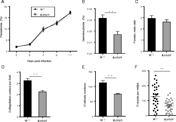 Functional analysis of PbPH during parasite development. a Mice were infected with P. berghei or Δpbph parasite and parasitemia was monitored for 11 days. b Gametocytemias in mice infected with wild-type (WT) and Δpbph parasites. ** P