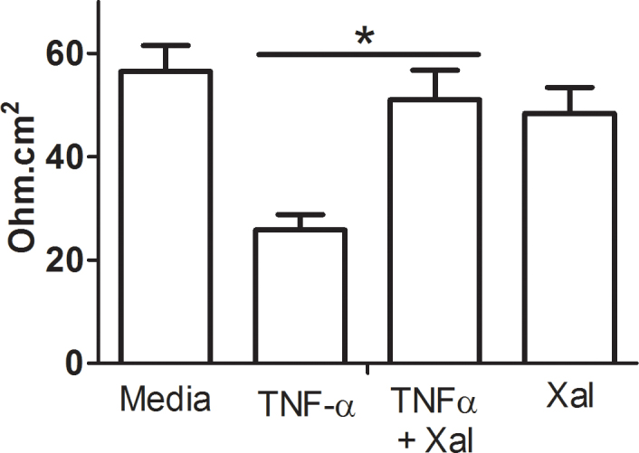 Xaliproden protects against the loss of tight junctions in the presence of TNF-α. ARPE-19 cells were seeded in 24 Transwell plates and grown in low serum medium for 4 weeks. The cells were then treated with tumor necrosis factor-α (TNF-α; 10 ng/ml), xaliproden (20 M), or a combination of the two or left untreated for 48 h before the transepithelial electrical resistance (TEER) was measured using a volt/ohm meter. Bars represent the average electrical resistance from triplicates ± standard deviation (SD). *, p = 0.005, as determined with one-way ANOVA. xal = xaliproden.