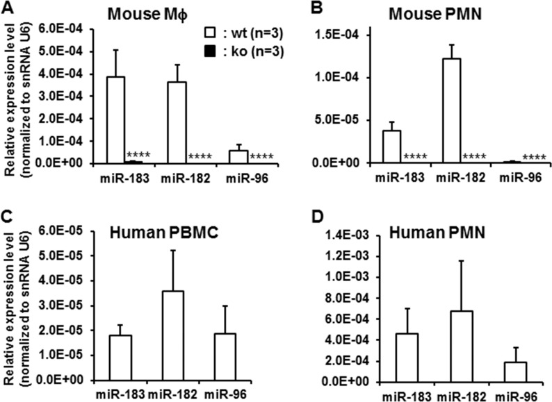 MicroRNA-183/96/182 is expressed in mouse Mϕ and <t>PMNs</t> ( A , B ) and in human <t>PBMCs</t> and PMNs ( C , D ). It is inactivated in the miR-183/96/182 ko mice ( A , B ). n = 3 for each group. **** P