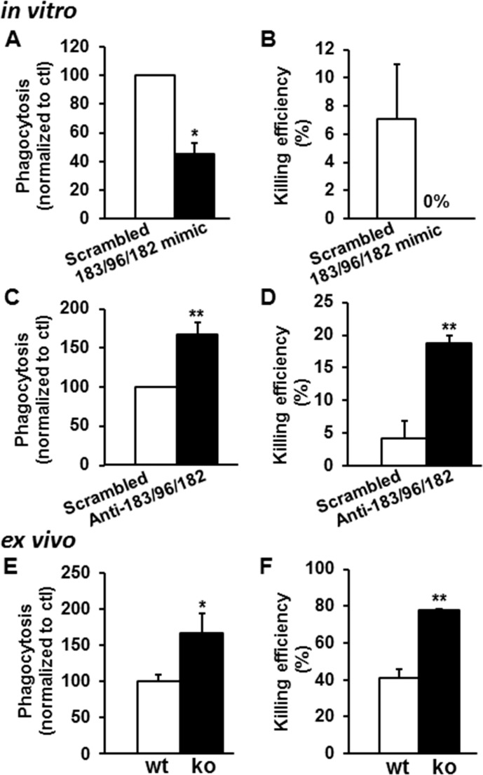 MicroRNA-183/96/182 modulates phagocytosis and intracellular killing capacities of Mϕ and PMNs. (A–D ) In vitro overexpression ( A , B ) and knockdown ( C , D ) of miR-183/96/182 in Mϕ cell line, Raw264.7. ( E , F ) Ex vivo phagocytosis and intracellular killing assays in PMN from miR-183/96/182 ko and wt mice. n = 4 for each group. * P