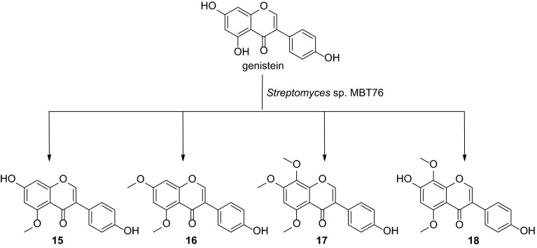 Biotransformation of genistein by S treptomyces sp. MBT76. Products were identified on the basis of NMR and/or <t>UPLC-ToF–MS</t> high resolution mass