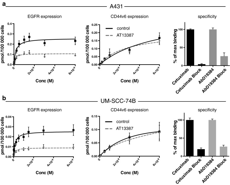 Expression of EGFR and CD44v6 and binding specificity in a A431 and b UM-SCC-74B cells using radioimmunoanalysis. Cells were exposed to 0.01 to 60 nM of 124 I/ 125 I-cetuximab or 124 I/ 125 I-AbD19384 and a 100-fold excess of unlabelled antibody was added at the highest concentrations to correct for nonspecific binding. The cells were counted and radioactivity measured in a gamma counter ( n = 3, error bars SD)