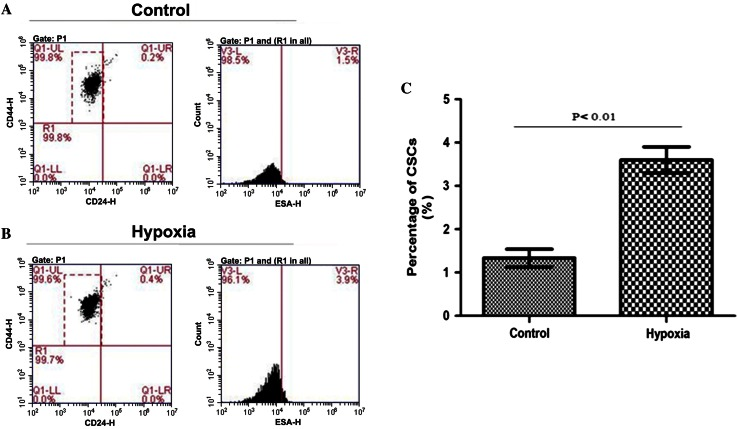 Effect of hypoxia on expression of stem cell markers in MDA-MB-231 cells. a Normoxic control group; b hypoxic group; and c group comparison of percentage of cells expressing CD24 − CD44 + ESA + : it is significantly higher in the hypoxic group 3.60 ± 0.30 % compared with the normoxic group 1.33 ± 0.21 % ( P