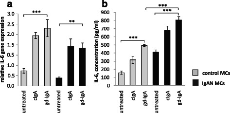 Gene expression and release of IL-6. IL-6 expression is known to increase in mesangial cells when stimulated with gd-IgA and has been suggested as a prognostic marker for IgAN but its role is still debated. Mesangial cells (MCs) from patients with IgA nephropathy (IgAN) and controls were stimulated with IgA1 purified from blood from healthy controls (cIgA) or patients with IgAN (gd-IgA) or medium only for 6 h and the gene expression was investigated. Stimulation with IgA on both controls MCs and IgAN MCs increased the gene expression of IL-6 in a similar pattern ( a ). The release of IL-6 into the medium after 24 h of stimulation was most pronounced for the gd-IgA treatment for both groups of cells, but the IgAN MCs released significantly more IL-6 than the control MCs stimulated with gd-IgA ( b ). Grey bars represent control MCs, black bars represent IgAN MCs * P