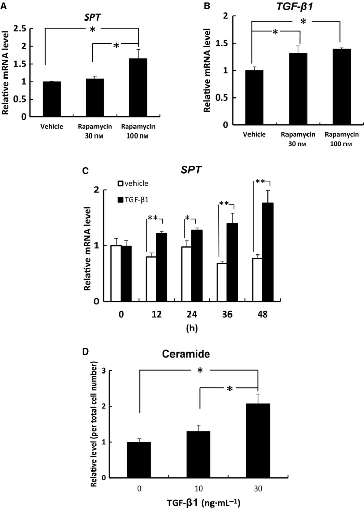 Rapamycin induced SPT and TGF‐β1 mRNA expression and TGF‐β1 induced ceramide synthesis and the mRNA levels of SPT in human <t>keratinocytes.</t> The mRNA levels of SPT (A, C) and TGF‐β1 (B) in human keratinocytes were measured by quantitative PCR and are expressed as a relative value to that of GAPDH. Ceramide levels in human keratinocytes were quantified by TLC. The ceramide levels (D) are expressed as a fold change relative to the band intensity in cells treated without TGF‐β1. Bars are given as mean ± SD ( n = 3). * P