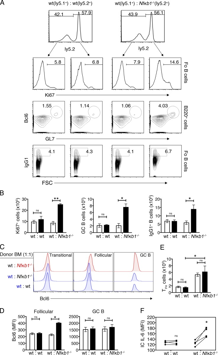 Enhanced B cell differentiation is the result of the cell-intrinsic loss of NFκB1. (A–F) mBM chimera mice were generated by mixing ly5.1 + WT BM cells with Nfκb1 −/− or WT (both ly5.2 + ) BM cells (1:1 ratio) and transferred into lethally irradiated ly5.1 + WT hosts. After 16 wk, spleens were isolated and processed for flow cytometry analysis. Splenocytes were defined on the basis of ly5.2 expression. (A) Ki67 expression in Fo B cells (B220 + CD21 int IgM lo ); dot plots show GL7 versus Bcl6 staining gated on B220 + cells (GCs; GL7 + Bcl6 + ) and IgG1 staining versus FSC gated on Fo B cells (IgG1 + B cells). The numbers represent percentages. (B) Absolute cell numbers of Ki67 + Fo B cells, GC B cells, and IgG1 + B cells. (C) Expression of Bcl-6 in B cell subsets derived from WT or Nfκb1 −/− BM cells in mBM chimeric mice. (D) Bcl-6 expression (mean fluorescence intensity [MFI]) in Fo and GC B cells. (E) Absolute numbers of WT and Nfκb1 −/− T FH cells (CD4 + CXCR5 + PD-1 + ). (F) Intracellular IL-6 expression in Fo B cells from mBM chimera mice. Results were derived from two independent cohorts of reconstituted mice ( n = 6/group). Statistical significance was determined using independent or paired samples Student's t tests as appropriate. *, P