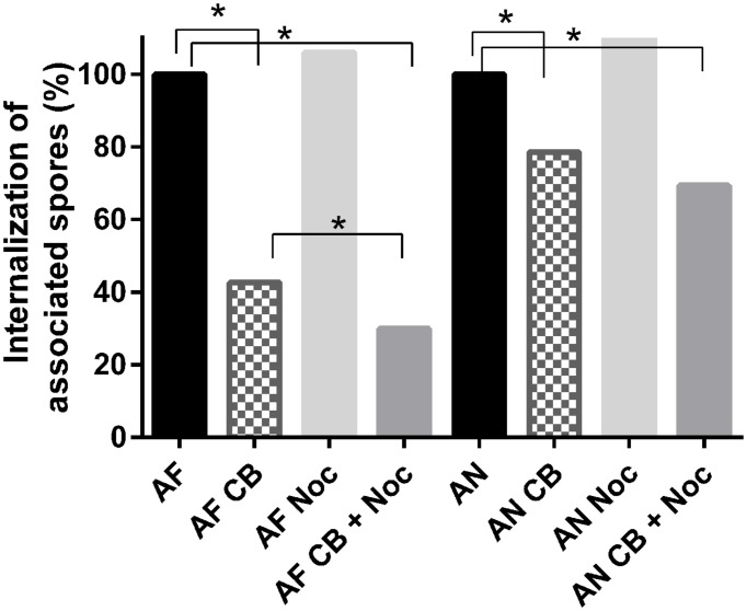 Cytochalasin-B and nocodazole block internalization of Aspergillus fumigatus more effectively than that of A. niger . Internalization of A. niger (AN) and A. fumigatus (AF) by A549 after treatment with 10 μM cytochalasin-B (CB), and/or 20 μM nocodazole (Noc). For analysis, each conidium was scored as either inside or outside the epithelial cells. A chi-square proportion test was performed using a z -test (α = 0.01) and adjusting P -values for multiple comparisons using the Bonferroni correction method. ∗ Indicates significant difference.
