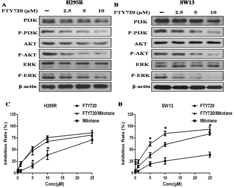 Effect of FTY720 on the activities of major signaling pathways, and effect of FTY720/mitotane combination on the proliferation of ACC cells ( A ) The antibodies against PI3K, phospho-PI3K Y607 (p-PI3K), AKT, phospho-AKT S473 (p-AKT), ERK, phospho-ERK pT202/pY204 + pT185/pY187 (p-ERK) were used to determine the effect of FTY720 on the activities of PI3K/Akt and MAPK signaling. Western blotting analysis revealed that FTY720 significantly reduced the levels of p-PI3K, p-AKT and p-ERK in a dose dependently manner in H295R cells; ( B ) Western blotting analysis revealed that FTY720 significantly reduced the levels of p-PI3K, p-AKT and p-ERK in a dose dependently manner in SW13 cells; ( C ) Cell viability after single or combined mitotane and FTY720 treatment. Cytotoxic response to mitotane and the combination of mitotane and FTY720 in H295R and SW13 cell lines.; ( D ) The combination of mitotane and FTY720 showed a significant synergistic anti-proliferative effect (CI = 0.90 ± 0.08) in SW13 cells that potentiated the cytotoxic effect observed by using FTY720 alone.