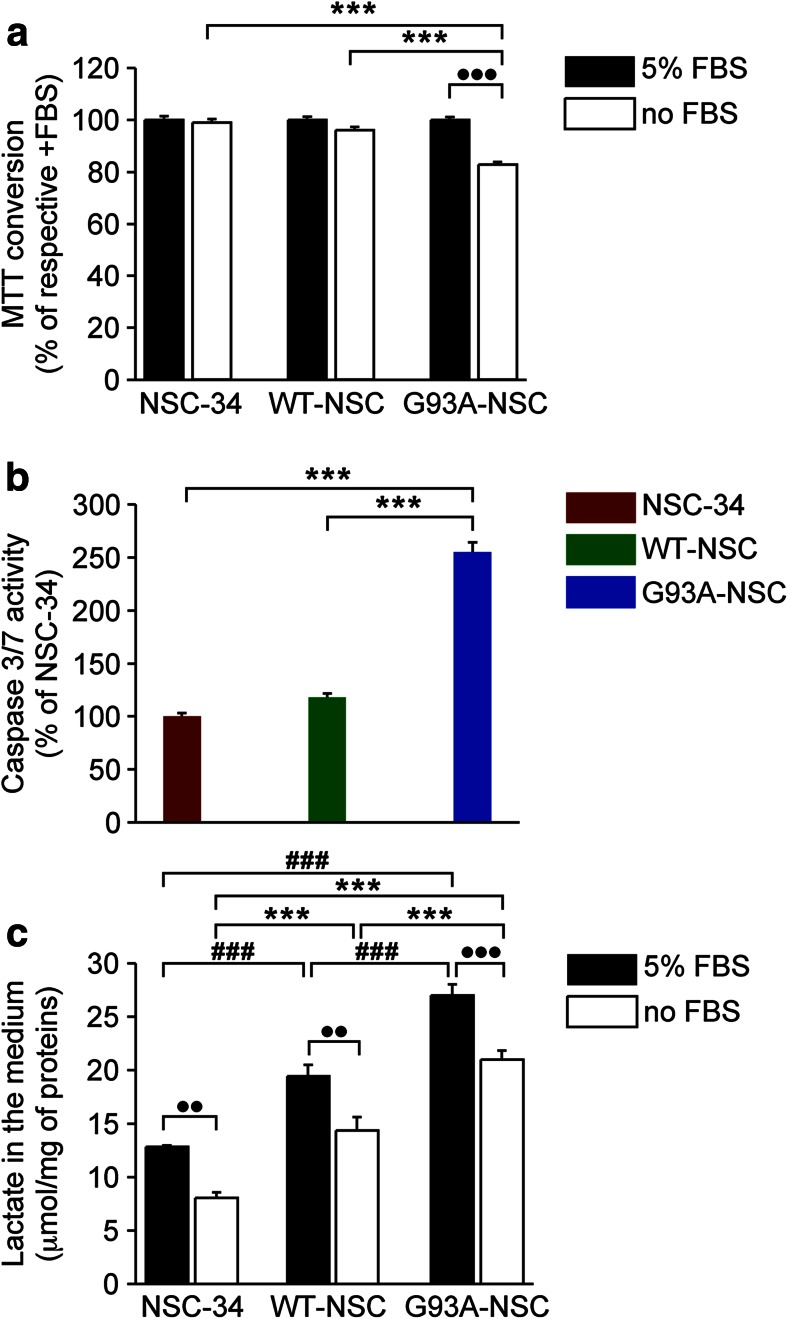 Serum deprivation causes selective cytotoxicity, caspase 3/7 activation, and increased lactate formation in G93ASOD1 cells. a The viability of the NSC-34, WT-NSC, and G93A-NSC cell lines was evaluated with the 3-(4,5-dimethylthiazol-2-yl)-2,5 diphenyltetrazolium bromide (MTT) assay after culture with or without 5 % fetal bovine serum <t>(FBS)</t> for 22 h. Percentages of the MTT conversion after culture with serum (100 %; n = 12) are shown. b Activation of caspase 3/7 of the NSC-34, WT-NSC, and G93A-NSC cell lines cultured without 5 % serum for 17 h. Values are percentages of the NSC-34 activity (100 %; n = 15). c Levels of lactate in the medium (μmol/mg of protein; n = 8) of the NSC-34, WT-NSC, and G93A-NSC cell lines cultured with or without 5 % serum for 22 h. All values are mean ± s.e.m. For each parameter, statistical significance of differences was assessed by one-way ANOVA and Tukey's post hoc test comparing the levels of the different cell lines with or without 5 % serum (respectively ### p
