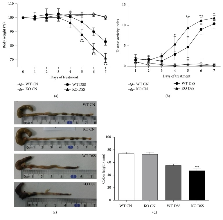 TRAF5-deficient mice are more susceptible to DSS induction. (a) Change in percent body weight. (b) Change in DAI scores. ((c) and (d)) Mice were sacrificed on day 7, and their colons were removed, photographed, and measured in terms of length. The data are presented as the mean ± SD. N = 10 per group. ∗ p