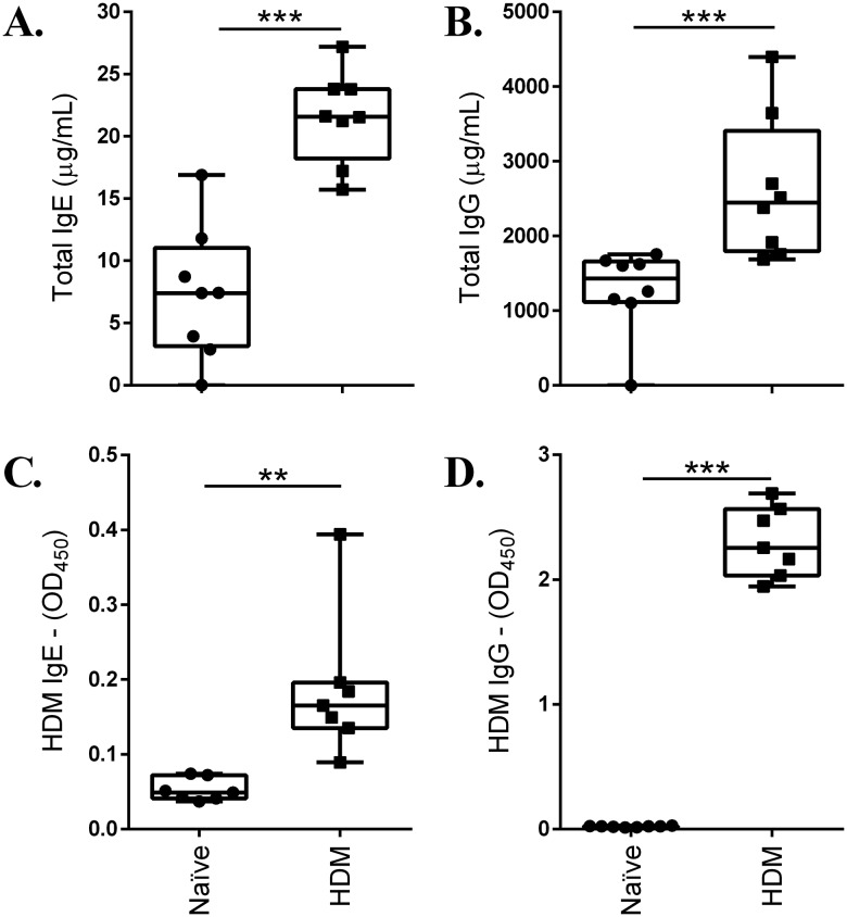 HDM challenge increases immunoglobulin levels. 8-10-week-old female Balb/c mice were challenged by intranasal administration of 35 μl of whole HDM extract (0.7 mg/ml) in saline, for 2 weeks. Immunoglobulin levels, (A) total IgE, (B) total IgG, (C) HDM-specific IgE and (D) HDM-specific IgG1, were monitored in serum from naïve ( n =8) and HDM-challenged ( n =8) mice, 24 h after the last HDM challenge, by ELISA. Results are shown as box plots with median line, and statistical analyses was performed using the Mann-Whitney U-test (** P ≤0.005, *** P ≤0.0005).