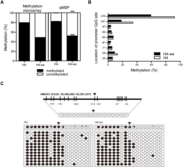 Hypomethylation of specific CpG sites within the HMOX1 promoter in H4-sw cells. DNA methylation status at the −374 CpG site was analyzed using (A) the Illumina HumanMethylation 27 BeadChip, (A) qMSP and (B) the 454 GS-FLX system. (C) The HMOX1 promoter region is located at position 35,380,082–35,381,037 in the human GRCh38/hg38 assembly and contains 17 CpG residues within chromosome 22. The 17 CpGs are located at positions −959, −919, −876, −791, −743, −706, −628, −602, −374, −341, −97, −92, −83, −81, −71, −59, and −55 from the transcription start site. Each circle represents CpG dinucleotides. The methylation status of each CpG site is illustrated by black (methylated) and white (unmethylated) circles, and the total percentage of methylation at each site is indicated by a pie graph on the top line. The black area of the pie graph indicates the methylated CpG percentage, whereas the white area indicates the unmethylated CpG percentage. Triangles above the circles or the bar in C indicate the specific CpG site that was used for qMSP and methylation microarray. Statistical analyses were performed using t -tests (*** p