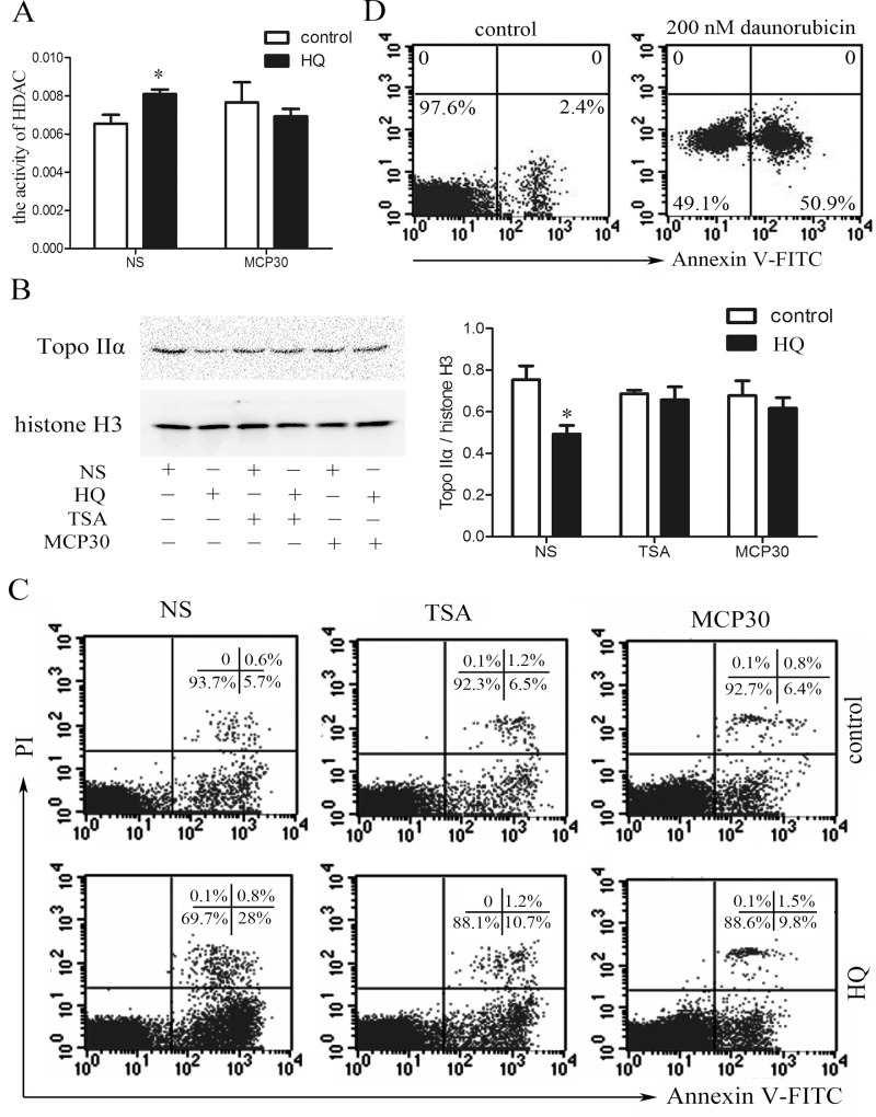 TSA or MCP30 restores the HQ-induced increased HDAC activity, decreased Topo IIα expression, and the resulting apoptosis in human bone marrow mononuclear cells. ( A—C ) Mononuclear cells were isolated from bone marrow aspirates from four healthy donors and subsequently treated with or without 100 μM HQ, in the presence or absence of TSA (0.5 μM) or MCP30 (1 μg/ml). After 24 h, the activity of HDAC ( A ), the expression of Topo IIα ( B ), and apoptosis ( C ) were determined using HDAC activity assay kit, western blot, and Annexin V/PI double staining, respectively. NS stands for normal saline. Histone H3 was used as a loading control for nuclear protein in western blot analysis. (D) Human bone marrow mononuclear cells were treated with or without a Topo IIα inhibitor daunorubicin (200 nM) for 48 h and apoptosis was measured using Annexin V staining. Statistical data and representatives of four independent experiments from different healthy donors were shown. * P