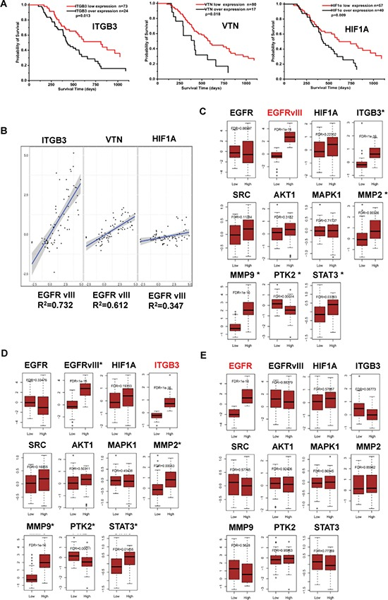 Significance of EGFRvIII, integrin β3, HIF-1α, VTN, and their relations in malignant glioma samples ( A ) Kaplan-Meier analyses [38] on the correlations between the relative expression of ITGB3 , HIF-1α , or VTN (vitronectin), and the overall survival time of 97 patients with malignant glioma at the mRNA level. ( B ) Pearson correlation on the transcriptional level of ITGB3 , HIF-1α , or VTN , and EGFRvIII in these tumor samples was analyzed by R software. Significance of EGFRvIII , ITGB3 and EGFR in these tumor samples were analyzed by bioinformatics methods as indicated in Materials and Methods. In the gene sets regulated by EGFRvIII (labeled in red) ( C ), or ITGB3 ( D ), or EGFR ( E ); effector expressions of the integrin β3/EGFRvIII-associated signaling axis in Figure 4E were shown; the effectors that had a significant change in gene expression were labeled with *.