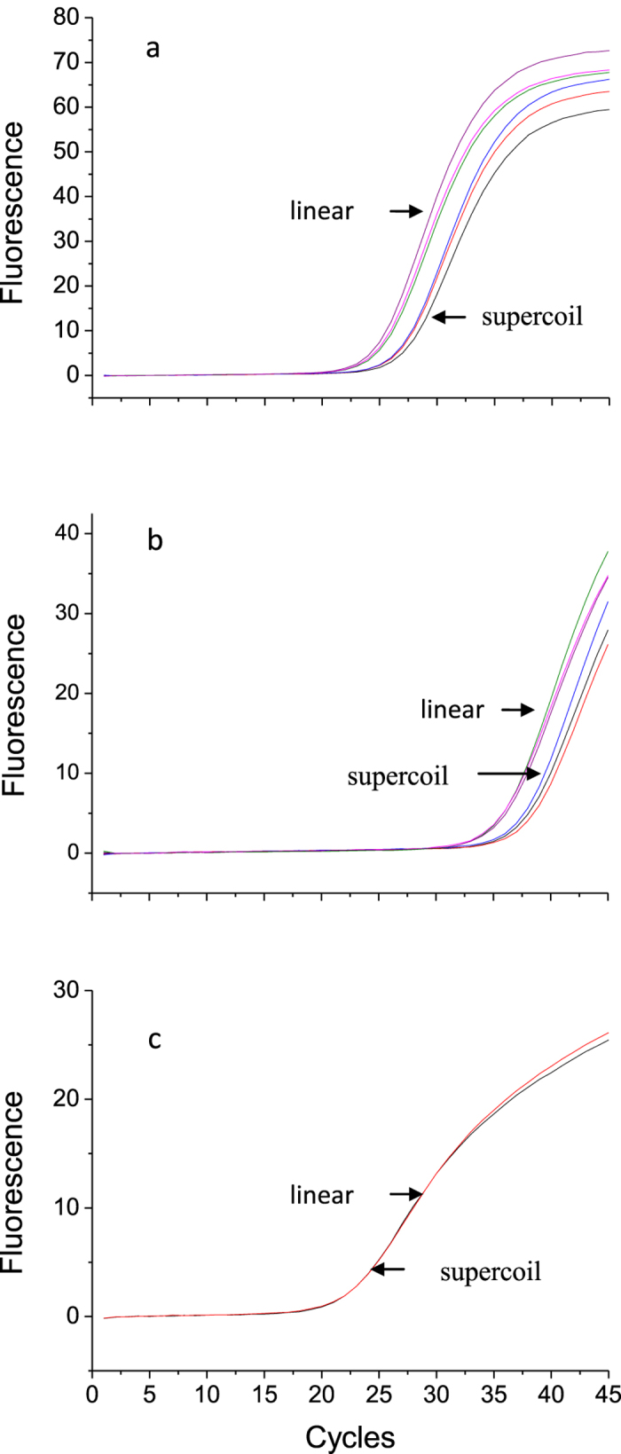 PCR amplification curves of linearized and supercoil pBR322 plasmid with ( a ) Gene Expression master mix (GE), ( b ) Environment master mix (EN) and ( c ) 16S DNA Free master mix (DF).