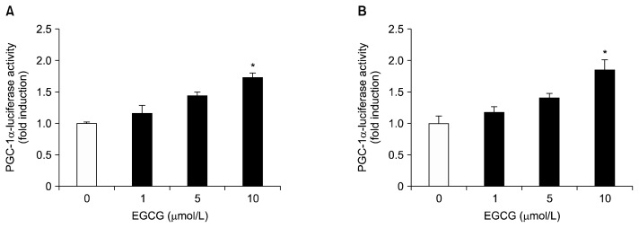 Effects of EGCG on the promoter activity of PGC-1α in HepG2 cells (A) and 3T3-L1 adipocytes (B). HepG2 cells and differentiated 3T3-L1 adipocytes were transfected with PGC-1α (−970/+412 bp)/luciferase reporter gene and pCMV-β galactosidase, and were then incubated in serum-free media with the indicated concentrations of EGCG, from 0 to 10 μmol/L, for 40 h. Luciferase activity was calculated in relative light units and normalized to the β-galactosidase activity. Values are expressed as mean±SEM (n=3) of three independent experiments. * P