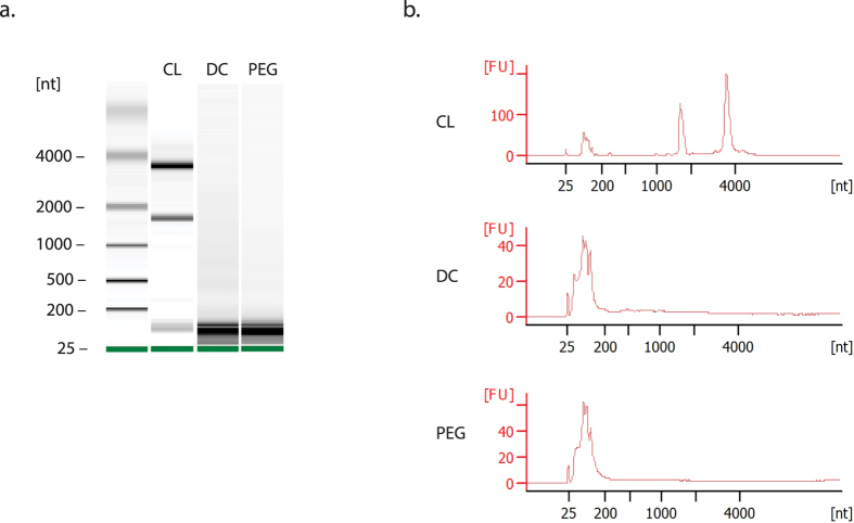 Extracellular vesicles harvested by ExtraPEG contain small RNAs. Exosome and cellular RNA were analyzed using the Agilent 2100 Bioanalyzer. ( a ) Gel-like image displaying RNA separated by size, for cell lysate (CL), differential centrifugation (DC), and the ExtraPEG (PEG) methods samples. ( b ) Electropherograms of RNA profiles from CL, DC, and PEG samples. [nt], nucleotide length. [FU], fluorescent units.