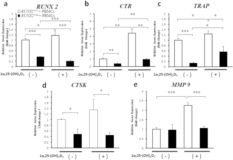Expressions of osteoclast-related genes were restrained by RUNX2 mutation in hDFCs and PBMCs co-culture and regulated by 1α,25-(OH) 2 D 3 stimulation. hDFCs from normal control ( RUNX2 +/+ ) and CCD patient ( RUNX2 +/m ) were co-cultured with peripheral blood mononuclear cells (PBMCs) in culture medium containing 1 × 10 −7 M 1α,25-(OH) 2 D 3 or equal volume of ethanol for 14 d (n = 4). ( a – e ) qRT-PCR was used to investigate the expression of RUNX2 and osteoclast-associated genes including CTR , TRAP, CTSK and MMP9 (n = 4). * P