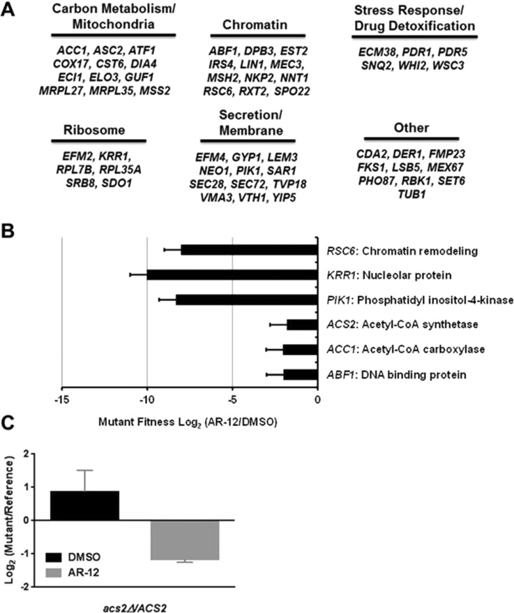 Chemical-induced haploinsufficiency identifies acetyl CoA synthetase as a candidate target for AR-12. (A) S. <t>cerevisiae</t> heterozygous deletion mutants of the listed genes show altered AR-12 susceptibility in a chemical-induced haploinsufficiency screen. (B) Essential genes with fitness defects in the screen. Bars indicate mean fitness defects with error bars indicating the standard deviation of four independent experiments. (C) Relative growth of C. albicans acs 2Δ/ <t>ACS2</t> normalized to reference strain in the presence and absence of AR-12. Data are from two to four replicates with a standard deviation indicated by error bars.