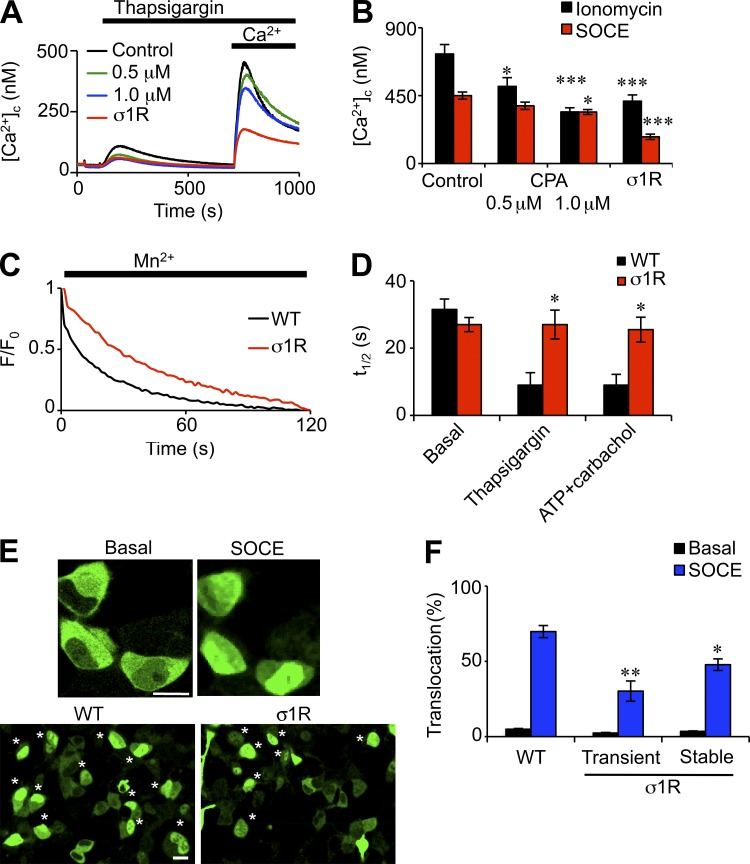 Stable and transient expression of σ1R inhibits SOCE. (A) Ca 2+ signals evoked by 1 µM thapsigargin in Ca 2+ -free HBS followed by restoration of 4 mM extracellular Ca 2+ in HEK wild-type cells treated with CPA (0.5 µM or 1 µM for 2.5 h) or HEK-σ1R cells. (B) Summary results show peak increases in [Ca 2+ ] c evoked by SOCE or by addition of ionomycin in Ca 2+ -free HBS ( n = 3). (C) Populations of fura 2–loaded cells were treated with thapsigargin (5 µM for 10 min) in nominally Ca 2+ -free HBS before addition of 5 mM MnCl 2 . Results show normalized fluorescence intensity (F/F 0 ) for six replicates. WT, wild type. (D) Summary results ( n = 3) show half-times (t 1/2 ) for fluorescence quenching from unstimulated cells (basal) and cells treated with thapsigargin (5 µM for 10 min) or ATP and carbachol (100 µM each for 3.5 min). (E) Typical images of HEK cells expressing NFAT-GFP before and 30 min after addition of 5 µM thapsigargin in normal HBS (top). Bar, 10 µm. Images of larger fields (bottom) show thapsigargin-treated HEK wild-type and HEK-σ1R cells. Asterisks indicate cells used for analysis. Bar, 20 µm. (F) Summary results show nuclear translocation of NFAT-GFP before and after treatment with thapsigargin (percentage of cells; six independent fields, with between 595 and 660 cells counted for each condition). *, P