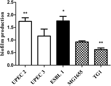 The antibacterial effect of CORM-2 on biofilm formation. Effect of CORM-2 (250 μM) on biofilm formation in non-ESBL-producing UPEC isolates (UPEC 2 and 3), in an ESBL-producing isolate (ESBL1) and in the non-pathogenic E. coli K-12 strains MG1655 and TG1. Biofilm formation was measured by the crystal violet method 18 h after exposure to CORM-2 and expressed as relative changes compared to untreated controls. The data are presented as mean ± SEM from at least three independent experiments. * P