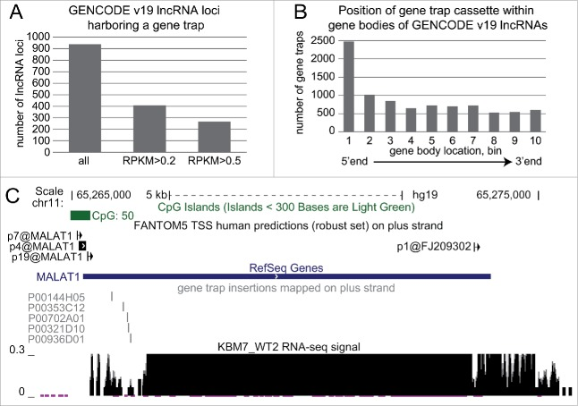 "Haploid gene trap collection represents a rich resource for quick functional assessment of hundreds of lncRNAs. (A) Hundreds of GENCODE v19 lncRNAs expressed in KBM7 cell line are targeted by a gene trap insertion. Bar plot shows number of non-overlapping GENCODE v19 lncRNA loci that contain a gene trap cassette in the same transcriptional orientation in KBM7 clones within the ""Human Gene Trap Mutant Collection"" (left bar, Methods), and the number of these lncRNA loci that are expressed (middle bar, loci that contain lncRNA transcripts expressed with RPKM > 0.2) and well expressed (right bar, loci that contain lncRNA transcripts expressed with RPKM > 0.5) in wild type KBM7 cells. (B) Gene trap cassettes are preferentially inserted at the 5' end of lncRNAs. Bar plot shows the number of gene trap cassettes inserted into different regions in the gene bodies of GENCODE v19 lncRNA. Numbers correspond to 10 equally sized, non-overlapping regions investigated for each gene. (C) Five genetic truncations of the well-known lncRNA MALAT1 are available within the ""Human Gene Trap Mutant Collection."
