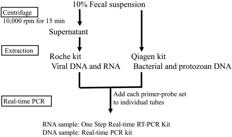 Dembo-PCR workflow. To prepare each sample for assay, 10% fecal suspensions were made in PBS (−). The suspensions were then used directly for the extraction of bacteria and protozoa nucleic acids with a QIAamp Fast DNA Stool Mini Kit. For virus detection, the suspensions were centrifuged for 15 min at 10,000 rpm, and viral DNA and RNA were extracted from the supernatants with a High Pure Viral Nucleic Acid Kit. After pathogen RNA and DNA were extracted, samples, reagents and each primer and probe were mixed in individual reaction tubes. Samples were applied at 2 µl per tube. A LightCycler Nano was used for all qPCR reactions performed in this study. A one step PrimeScript RT-PCR Kit (Perfect Real time) was used for amplification of extracts from RNA viruses, and Premix Ex Taq (Perfect Real time) was used for amplification of extracts from DNA viruses, bacteria and protozoa.