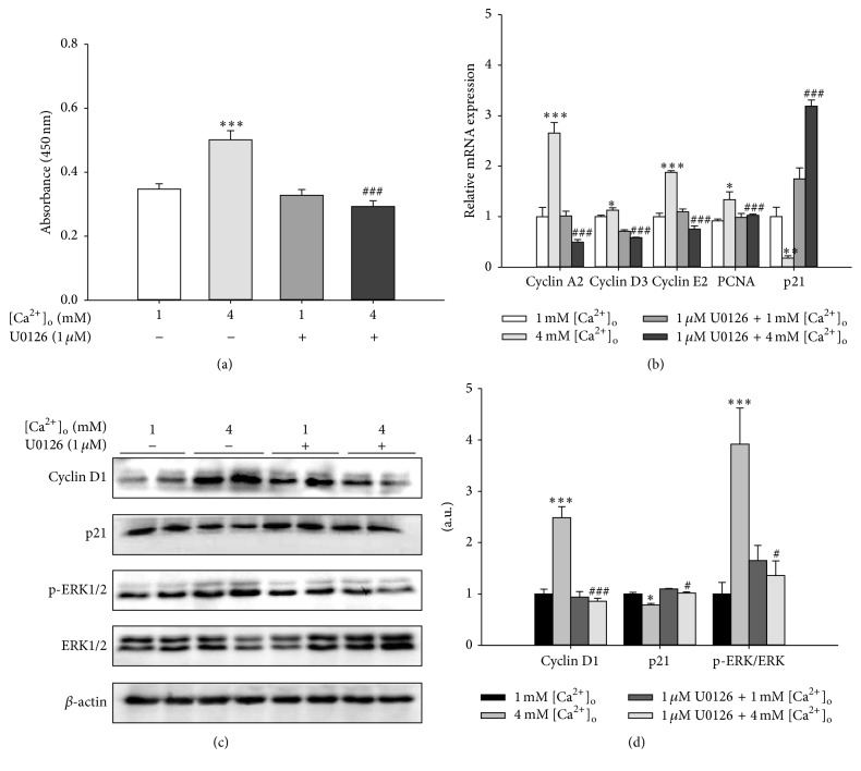 Inhibition of <t>ERK</t> pathway abolished [Ca 2+ ] o -induced proliferation of pBMSCs. (a) Effects of <t>U0126</t> (1 μ M), an inhibitor of MEK, on the proliferation of pBMSCs after 5-day incubation ( n = 8). (b) The mRNA expression levels of cyclins (cyclin A2, cyclin D3, and cyclin E2), PCNA, and p21 in response to 4 mM [Ca 2+ ] o and/or 1 μ M U0126. (c) Western blot analysis of cyclin D1, p21, phosphor-ERK (p-ERK), and ERK in pBMSCs after 5-day culture. β -actin was used as loading control. (d) Mean ± SEM of immunoblotting bands of cyclin D1, p21, and p-ERK/ERK. The intensities of the bands were expressed as the arbitrary units ( n = 4). ∗ P