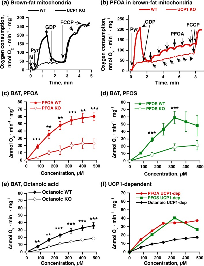 PFOA-/PFOS-stimulated oxygen consumption: dependence on UCP1. Representative traces showing the effects of FCCP ( a ) and PFOA ( b ) on oxygen consumption in brown adipose tissue mitochondria ( M , 0.3 mg/ml) from UCP1 KO ( thin line ) or wild-type ( WT ) ( heavy line ) mice. Additions were 5 mM pyruvate ( Pyr ), 1 mM GDP, and 0.7–2.1 µM FCCP (added successively). PFOA was successively added in the concentration range 80–480 µM (each addition was 80 µM). c Compilation of the effect of PFOA, based on experiments as those shown in b . Concentration–response curve of PFOS ( d ) and octanoic acid ( e ) in brown-fat mitochondria from UCP1 KO or WT mice. Mitochondria were examined as shown for PFOA in b , except that not all concentrations of PFOS were examined in UCP1 KO. f UCP1-dependent effects of PFOA, PFOS, and octanoic acid on oxygen consumption. The values were obtained by subtraction of the means of effects in UCP1 KO mitochondria from the corresponding means of effects in wild-type mitochondria. The points in c – f are mean ± SE of 4–8 independent mitochondrial preparations for each group. *Difference between genotypes (two symbols P