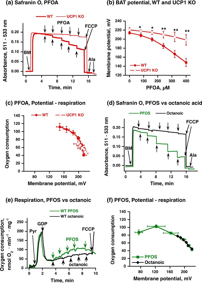 Effect of PFOA/PFOS on membrane potential in brown-fat mitochondria. a Representative traces showing the effects of PFOA on membrane potential (safranin O absorbance) in brown-fat mitochondria isolated from UCP1 KO ( thin line ) or wild-type ( heavy line ) mice. 5 mM pyruvate and 1 mM GDP were added before start of trace recording. Further additions in a were 0.25 mg/ml brown-fat mitochondria ( BM ), 2 µM FCCP and 0.02 mg/ml alamethicin ( Ala ). PFOA was added successively to obtain concentrations of 80–400 µM (each addition was 80 µM). b Effect of increasing PFOA concentrations on membrane potential in brown-fat mitochondria from wild-type and UCP1 KO mice. Data from experiments as in a were recalculated as membrane potentials (detailed in (Nedergaard 1983 ; Shabalina et al. 2014 ). c Oxygen consumption as an effect of membrane potential. Data from b were plotted with the corresponding values for oxygen consumption. To allow for direct comparisons, all corresponding results are from one experimental day, with parallel mitochondrial preparations of wild-type and UCP1 KO mitochondria, examined in parallel for respiration (as in Fig. 1 ) and membrane potential. The points in b and c are mean ± SE of 4 independent mitochondrial preparations for WT and 2 preparations for UCP1 KO group. In b , asterisks indicate significant differences between wildtype and UCP1 KO mitochondria (one symbol P