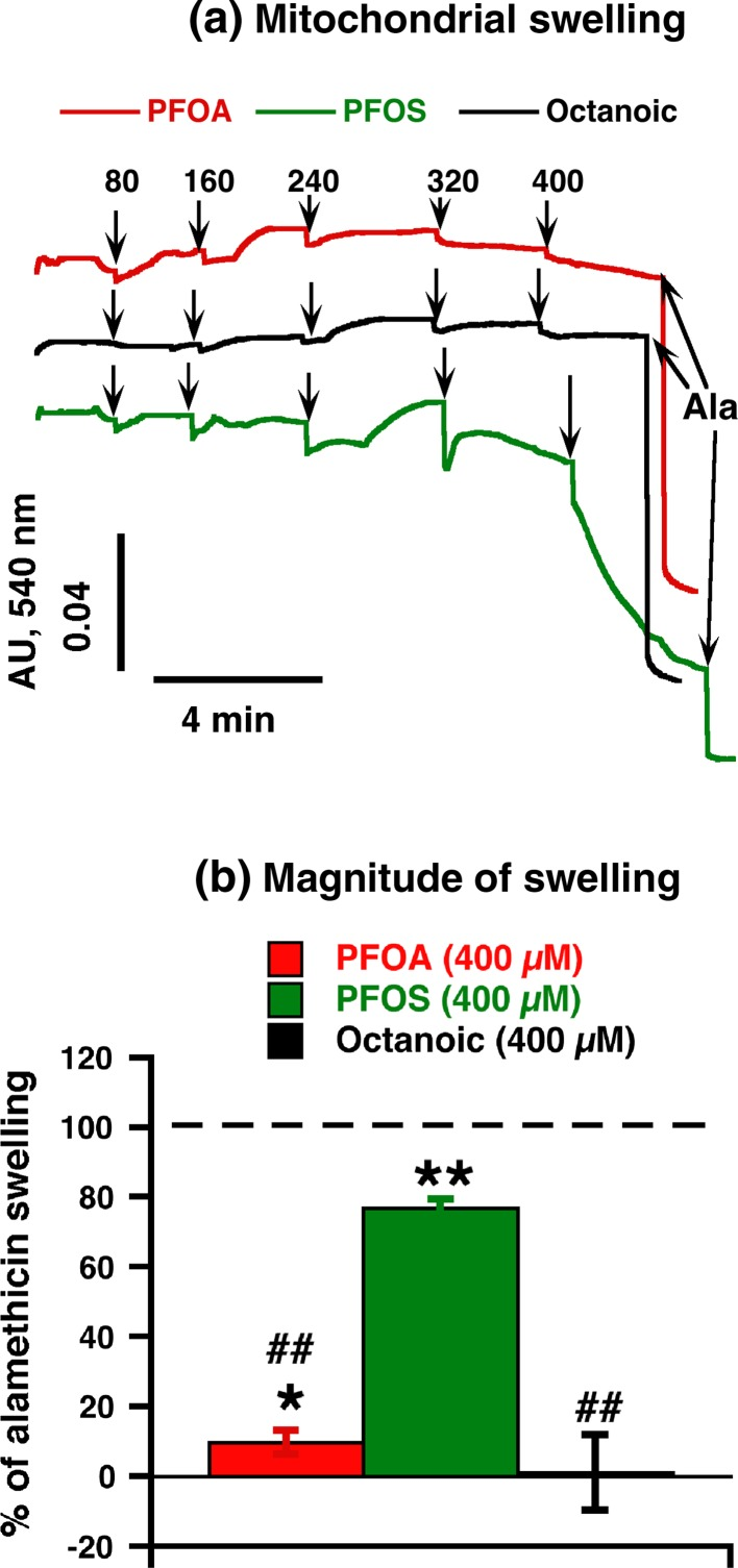 Effect of PFOA/PFOS on mitochondrial swelling in brown-fat mitochondria. a Representative traces showing the effects of PFOA, PFOS and octanoic acid on non-specific mitochondrial permeabilization in brown-fat mitochondria isolated from wild-type mice. Pyruvate (5 mM) and 1 mM GDP were added before the start of the trace recording. Additions were 0.25 mg/ml brown-fat mitochondria, and at the end 0.02 mg/ml alamethicin ( Ala ) (to allow for full mitochondrial permeabilization). PFOA, PFOS and octanoic acid were successively added to concentrations 80–400 µM (each addition was 80 µM and recorded during 2.0–2.5 min). To allow for direct comparisons, all traces shown are from one experimental day. b Quantification of the amplitude of swelling exactly 2 min after the final addition (400 µM) of PFOA or PFOS or octanoic acid. Values are indicated in percent of the maximum response [defined as the absorbance difference between the starting value (0 concentration) and the value after alamethicin addition]. The points are mean ± SE of 3–5 independent mitochondrial preparations. *Indicates difference between intact mitochondria (swelling is equal to 0) and agent; # Difference between PFOS and other tested chemicals (one symbol indicates P