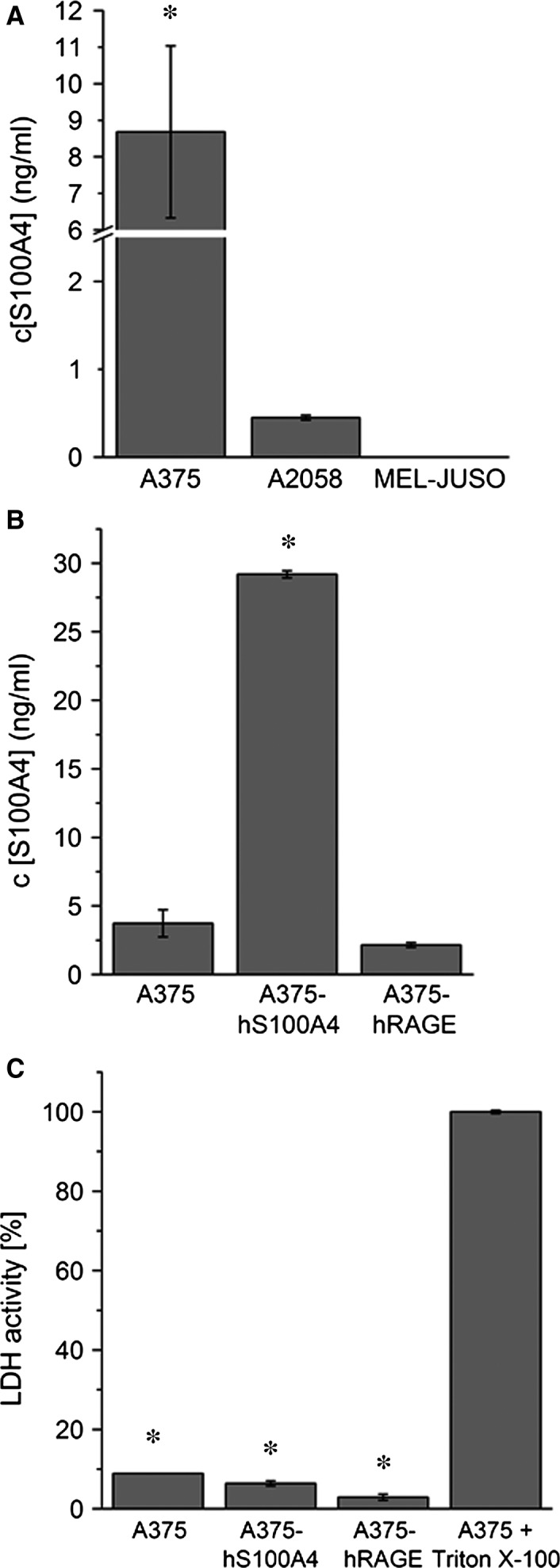 Active secretion of S100A4. ( A ) Extracellular S100A4 was detected after 4 hrs of incubation in cell culture supernatants of A375, A2058, and MEL ‐ JUSO cells via ELISA (mean ± S.E.M., n = 3, * P