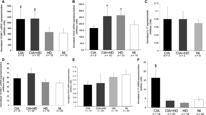 mRNA  expression of pro‐inflammatory molecules in aortas ( A – C ) and synovium ( D – F ) of immunized and nonimmunized mice fed an  HD  or standard chow diet. Quantitative  RT ‐ PCR  ( qRT ‐ PCR ) analysis of  mRNA  levels of vascular cell adhesion molecule‐1 ( VCAM ‐1) ( A  and  D ), inducible nitric oxide synthase ( iNOS ) ( B  and  E ) and interleukin 17 ( IL ‐17) ( C  and  F ). Data are mean ± S.E.M.  £ P