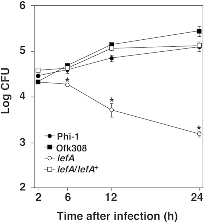 lefA mutant fails to grow in human monocytic <t>THP-1</t> cells. Infected THP-1 cells were cultured for 2, 6, 12, and 24 h. Data are the averages of triplicate samples from three identical experiments, and error bars represent standard deviations. Statistically significant differences compared to Phi-1 are indicated by asterisks (* P
