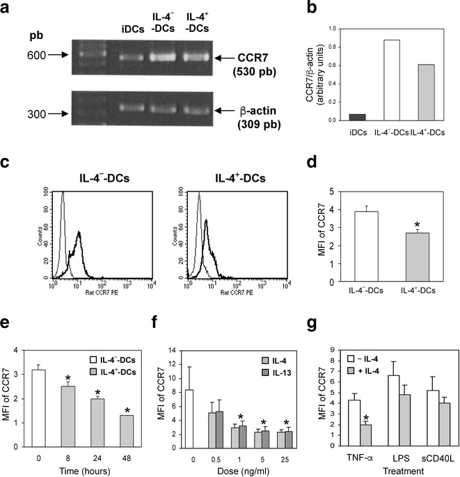 IL-4 reduces CCR7 mRNA synthesis, intracellular and surface protein content in TNF-α-matured DC. a RT-PCR analysis of CCR7 and β-actin mRNA expression in 5 × 10 4 iDC, IL-4 − and IL-4 + -DC. b Quantification of RT-PCR analysis in ( a ). Data are expressed as the ratio of expression of CCR7 to β-actin. The results are representative of four independent experiments. c Interleukin-4 − and IL-4 + -DC were fixed, permeabilized and stained with rat PE-anti-CCR7 antibody (bold lines) or its isotype control (thin lines ) and analyzed by flow cytometry. The results are representative of six independent experiments. d Mean fluorescence intensity (MFI) of CCR7 intracellular content expressed as the ratio of fluorescence intensity of specific labeling to background staining. The results are the mean ± SEM of the MFI from six independent experiments. e Immature DC were cultured for 0, 8, 24 or 48 h with IL-4 (25 ng/mL) during maturation with GM-CSF and TNF-α. f Immature DC were cultured for 48 h, either in the absence of (0) or with increasing concentrations (0.5, 1, 5, 25 ng/mL) of IL-4 or IL-13, during maturation with GM-CSF and TNF-α. g Immature DC were activated with GM-CSF and TNF-α (20 ng/mL), LPS (50 ng/mL) or <t>sCD40L</t> (250 ng/mL) in the absence or presence of 25 ng IL-4. e – g Cells were stained with PE-anti-CCR7 antibody and analyzed by flow cytometry. The results are the mean ± SEM of the MFI from four to five separate experiments. *P