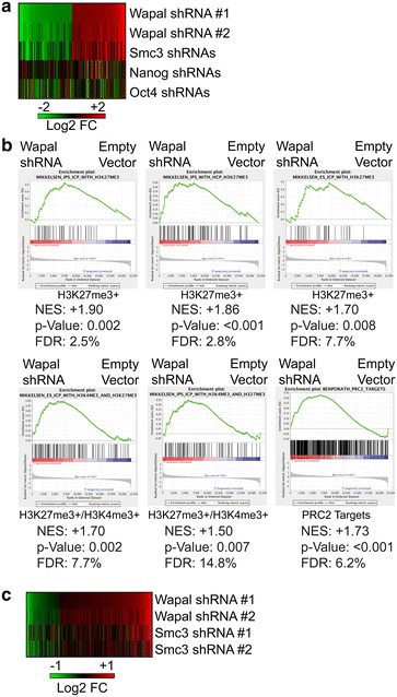 """a The 100 probes most upregulated ( red ) or downregulated ( green ) with shRNA #1 to Wapal were identified and the Log2 fold change (Log2 FC) calculated for Wapal shRNA #2, Smc3 shRNAs, and from published studies in which the pluripotency-associated TFs Nanog or Oct4 were depleted by siRNAs. Log2 FC is displayed, with the color scheme indicated. b GSEA was used (see """" Methods """" section for details) to identify pathways globally dysregulated by Wapal depletion. Six gene sets from pluripotent cells which all exhibited substantial enrichment in Wapal-depleted samples are shown. Positive normalized enrichment score (NES) indicates that the gene set is enriched in Wapal-depleted samples as compared to samples infected with the empty vector. False discovery rate (FDR"""