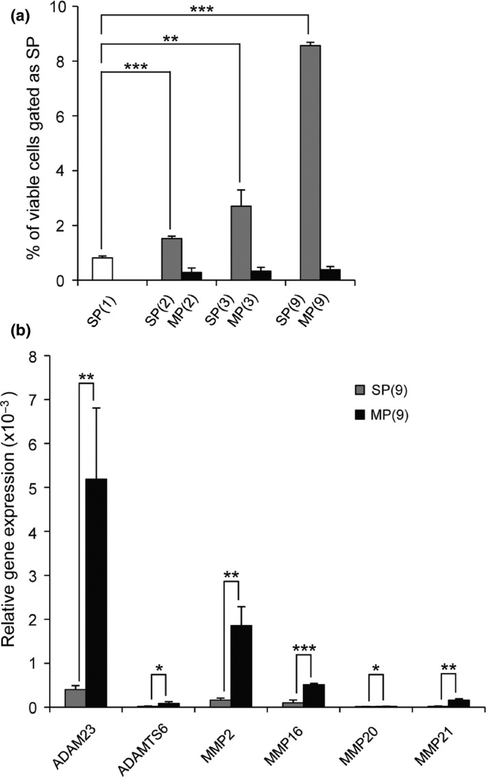 Propagation of A549‐derived side population ( SP ) cells by successive rounds of FACS and relative gene expression of the ADAM , ADAMTS and MMP family members in main population ( MP ) and SP . (a) SP cell fraction was sequentially sorted up to nine times. Percentage of SP cells re‐sorted from SP (2), MP (2), SP (3), MP (3), SP (9) and MP (9) is shown ( n = 3). (b) The ADAM , ADAMTS and MMP family members with significantly increased expression in MP (9) compared to SP (9) by the PCR array ( n = 3). Bars, mean ± SD . * P
