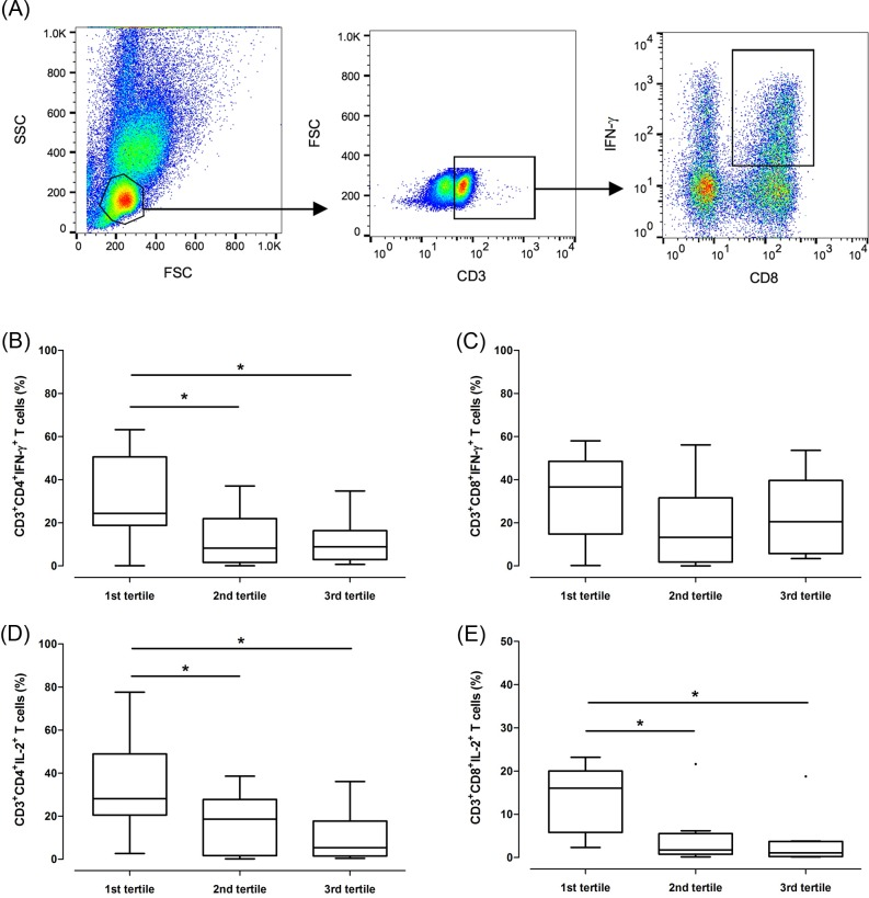 Activation of CD4 + (B and D) and CD8 + (C and E) T cells according to tertiles of intracellular tacrolimus concentrations. (A), Example of the dot plot gating strategy used to calculate the proportion of interferon-γ-producing CD3 + CD8 + T cells. (B) and (C), Flow cytometry to identify T cells producing interferon-γ. (D) and (E), Flow cytometry to identify T cells producing interleukin-2. IFN-γ, interferon-γ; IL-2, interleukin-2.