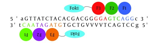 The ZFN Target Site Identified by the CoDA Platform in the β-lactamase Gene of the pTZ57R Plasmid