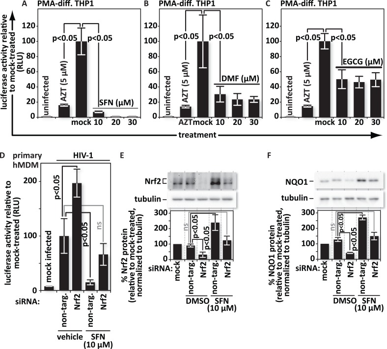 SFN acts through Nrf2 to block HIV infection in macrophages. PMA-differentiated THP1 cells were pretreated for twenty-four hours with the Nrf2 activators: (A), SFN, (B), DMF, or (C), EGCG at the indicated concentrations. Pretreatment of cultures with 5 μM of the reverse transcription inhibitor zidovudine (AZT) served as a positive control for viral inhibition. Twenty-four hours after treatment, cells were either mock infected or infected with VSV-G-pseudotyped HIV-1 encoding firefly luciferase in place of nef . Twenty-four hours after infection, the cells were harvested and luciferase activity was measured by photon emission. The bar graphs represent the data for replicate experiments (n = 3). (D), Cultures of hMDMs were transfected with either a non-targeting siRNA (control) or siRNA specific for Nrf2 mRNA. siRNA transfected hMDMs were either treated with vehicle (DMSO) or with 10 μM SFN. Twenty-four hours after treatment, the cells were either mock infected or infected with VSV-G-pseudotyped HIV-1 encoding firefly luciferase in place of nef . Twenty-four hours after infection, the cells were harvested and luciferase activity was measured by photon emission. The bar graphs represent the quantified data for replicate experiments (n = 3). (E) and (F), Representative samples from (D) were lysed and proteins from whole cell lysates were resolved by SDS-PAGE and identified by western blotting using antibodies with the indicated specificities. Densitometric analysis was performed on the Nrf2 and NQO1 (an indicator of Nrf2 function) bands and normalized to the values of the corresponding tubulin bands. The relative normalized intensities of the Nrf2 and NQO1 bands were then graphed. The data shown is representative of n = 3.