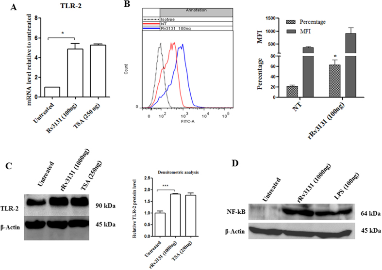 Rv3131 induces TLR2 expression and NF-κB activation. ( A ) Real time expression of TLR2: RNA isolated from differentiated THP-1 cells treated with rRv3131 (1000 ng) or TSA (250 ng) was reverse transcribed and real time PCR was carried out using gene specific primers. The expression of glyceraldehyde 3-phosphate dehydrogenase ( GAPDH ) was used as internal control. Data are presented as mean ± SEM of three independent experiments. ( B ) Surface expression of TLR2 by flow cytometry: PMA-differentiated THP-1 cells were treated with 100 ng of rRv3131 for 24 h followed by incubation with primary and secondary FITC labelled antibodies and analysed by flow cytometry. Data are expressed as mean ± SEM of percentage of cell population/MFI values from three independent experiments. ( C ) TLR2 protein expression: total protein isolated from differentiated THP-1 cells treated with rRv3131 (1000 ng) or LPS (100 ng) was electrophoresed on polyacrylamide gel, transferred onto PVDF membrane and probed with antibodies against TLR2 and β-actin (internal control). Signal corresponding to the intensity of the band was measured using chemiluminiscence. The graph represents relative TLR2 expression levels quantified densitometrically ( D ) NF-κB phosphorylation: the total protein isolated was analysed using western blot with antibodies specific to phosphorylated p65.