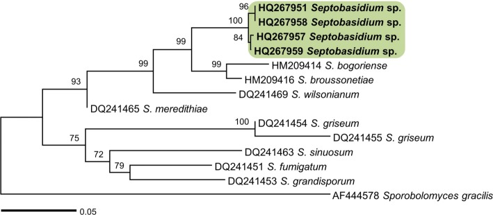A neighbor-joining tree based on the internal transcribed spacer rDNA sequences of Septobasidium sp. from Schisandra chinensis , including Septobasidium spp. retrieved from GenBank. Numbers above the branches represent bootstrap values. Isolates obtained in this study are shown in boldface.