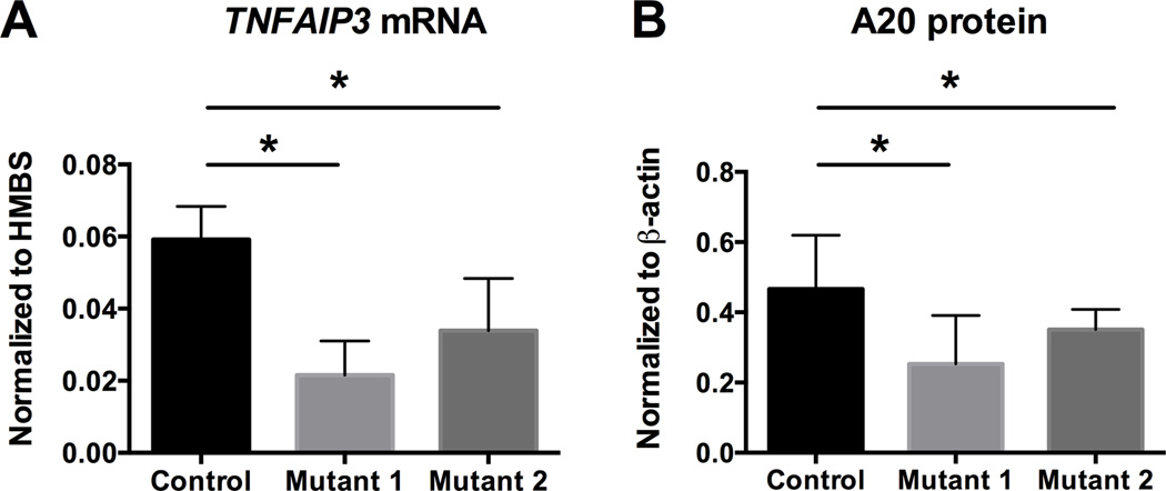 Mutating the TT > A enhancer region by TALEN engineering impairs TNFAIP3 expression A. Quantitative RT-PCR analysis of TNFAIP3 mRNA expression normalized to control HMBS mRNA in control and clonal mutant <t>HEK293T</t> cell lines. B. Western blotting analysis of A20 protein normalized to β-actin in parental (control) and clonal mutant HEK293T cell lines. Statistical significance was calculated using paired student t-test. For all experiments: n = 3, *p