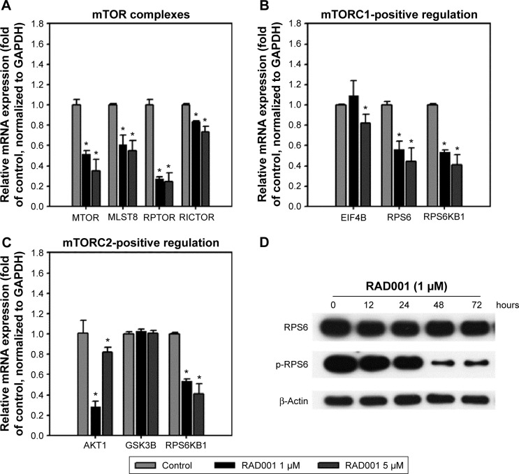 Inhibition of mTOR-related genes and mTORC1 downstream effectors by RAD001. Notes: qPCR detection of mTOR-related genes, including ( A ) mTOR complexes, ( B ) mTORC1-positive regulation, and ( C ) mTORC2-positive regulation in T24 cells treated with 1 or 5 µM RAD001. Cells were seeded 24 hours before RAD001 treatment. Total RNA samples were extracted at 24 hours posttreatment, reverse transcribed, and subjected to the detection of genes involved in mTOR signaling. The values are shown as the mean ± SD of three independent experiments; * P